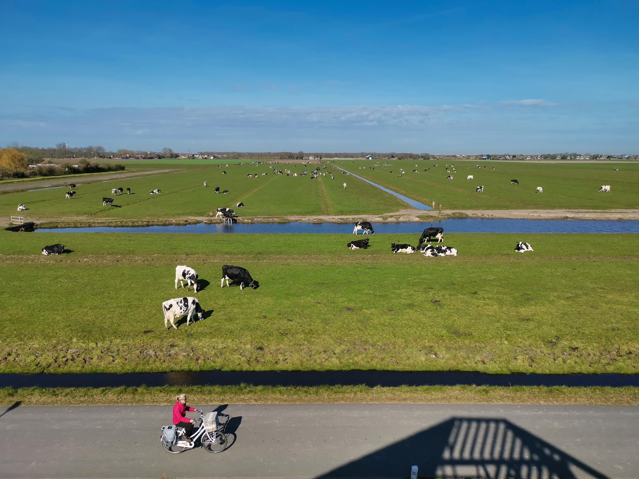 Panoramablick auf Kühe