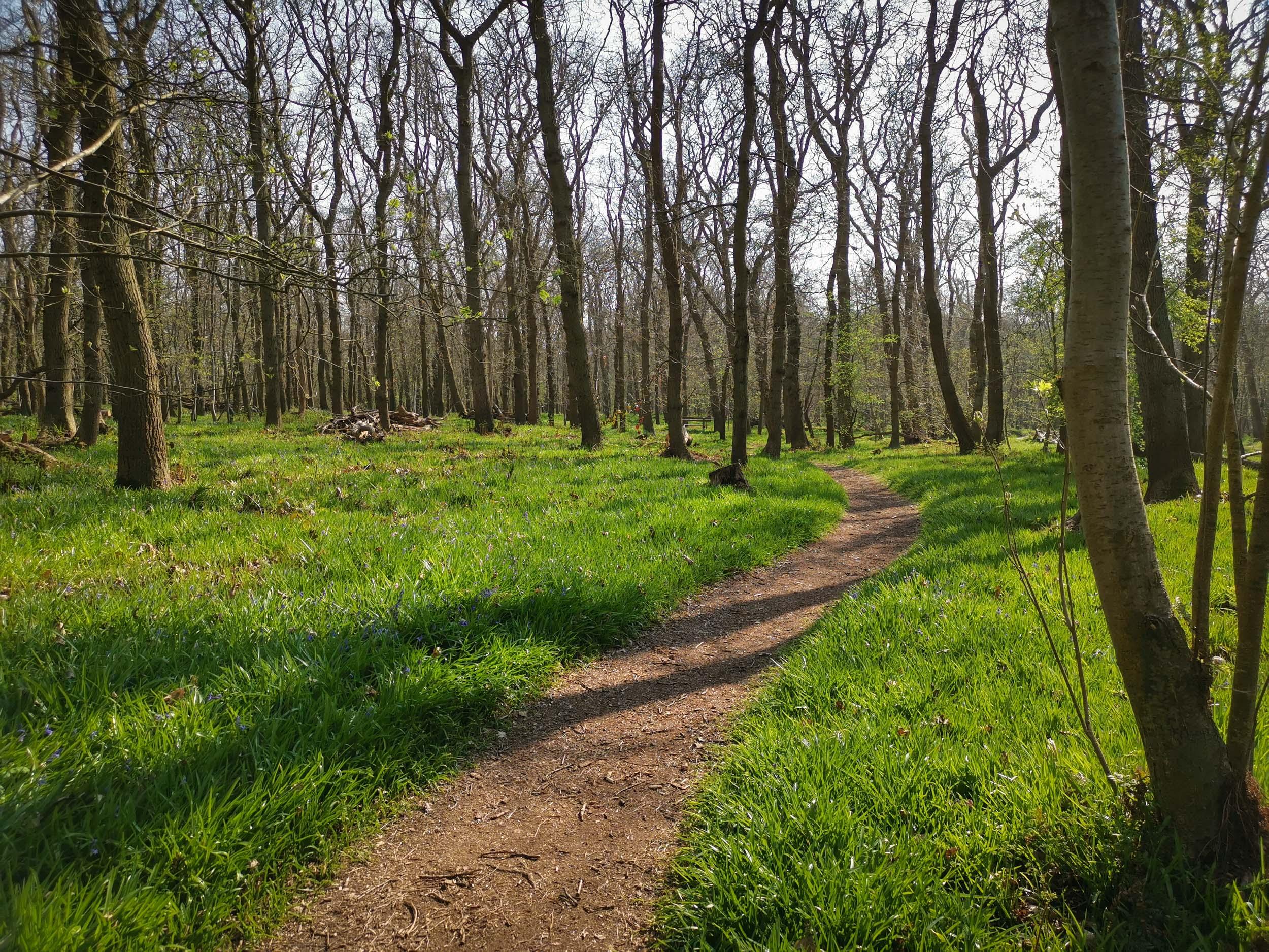 Het Wildrijk - Naturschutzgebiet Wald