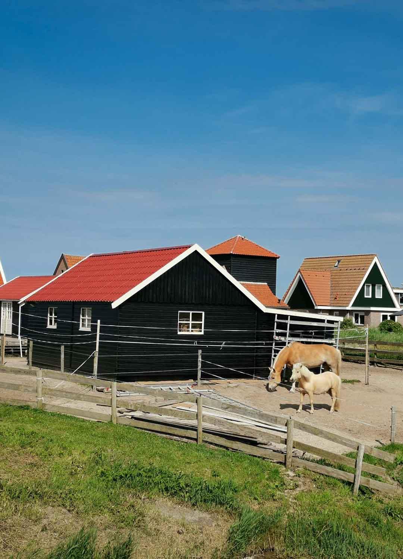 Bauernidylle in Nordholland