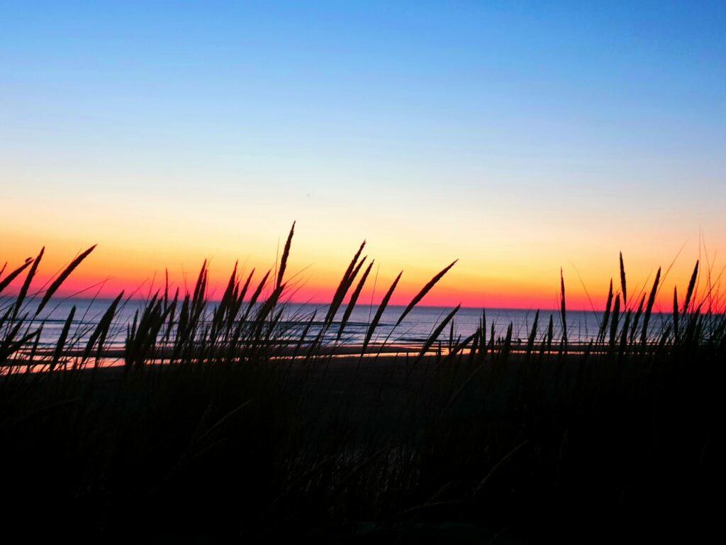Dünengras vor Sonnenuntergang – Strand von Petten Nordholland